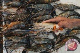 Distan Kota Bogor Jamin Produk Perikanan Aman