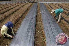 Jasindo: Asuransi Pertanian di Bali 6.958 Hektare