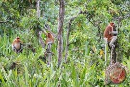 Regent determines Bakut Island, a public tourism area