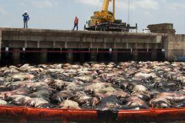 Kapal ternak terbalik akibat badai di perairan Jepang, 42 kru hilang