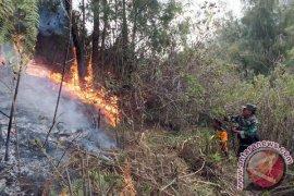Kepala TNTS: Habitat Elang-Lutung Jawa di Semeru Ikut Terbakar