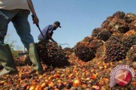 IPOP Dan Dampaknya Terhadap Industri Sawit Indonesia