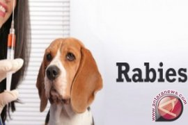Liur hewan dengan rabies bisa menularkan penyakit
