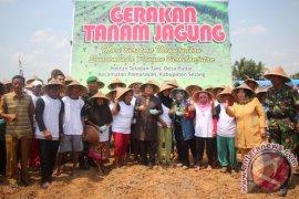 Distanak Banten Dukung Gerakan Tanam Jagung Di Pamarayan