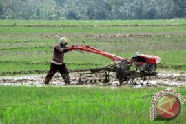 Petani Karawang Terbantu Adanya Asuransi Pertanian