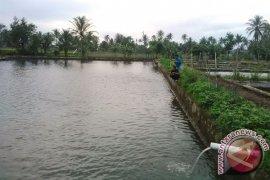 Optimalkan produksi benih ikan empat BBI diperbaiki