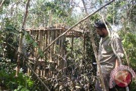 Tabalong Residents Hand Over Bekantan to Police