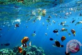 Buleleng terpilih untuk tempat restorasi taman terumbu karang Indonesia