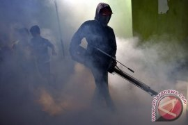 Lima Korban Meninggal Terkena DBD di Balikpapan