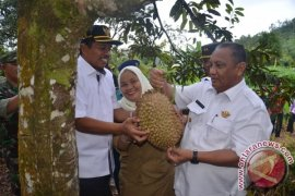 Pengembangan Tanaman Durian