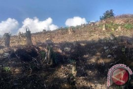 PLTA: Pasokan Air Kotor Akibat Hutan Gundul