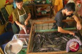 Permintaan Ikan Air Tawar Tinggi di Lhokseumawe