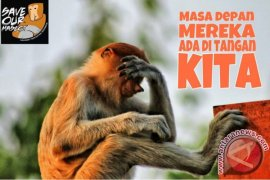 Veterinary student exiles a proboscis monkey from human