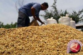 Nilai tukar petani Jambi naik 0,34 persen
