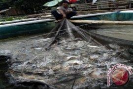 Sarolangun kembangkan produksi ikan air tawar