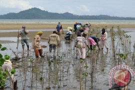 Mangrove Centre Purworejo Lamtim Jadi Destinase Wista