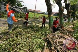 Antisipasi Pohon Tumbang Kediri