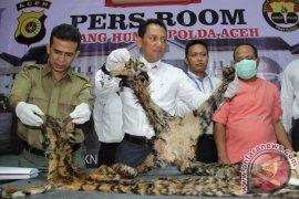 Polisi Tangkap Penjual Kulit Harimau