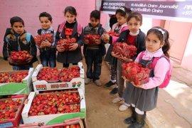 1,5 Ton Stroberi Bantuan Indonesia Untuk Anak Gaza