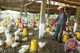 Pemprov Jatim Antisipasi Merebaknya Virus Flu Burung
