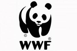 Bupati Sintang Bertemu WWF Indonesia dan Finlandia
