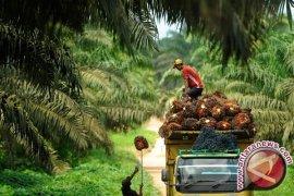 Resolusi Uni Eropa diskriminatif terhadap industri sawit