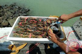 Polisi Tawau, Malaysia  amankan 5 ton kepiting selundupan dari Tarakan
