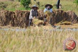BNI Menyiapkan Infrastruktur Kartu Tani di Bali