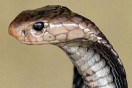 Pandemi corona paksa restoran ular Hong Kong tutup bisnis