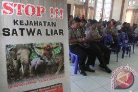 WWF: Perburuan Satwa Dilindungi di Sumatera Meningkat