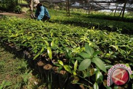 Kementerian LHK Siapkan Bibit Pohon Produktif Gratis