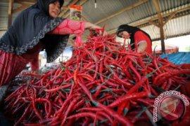 Harga cabai di Aceh Barat turun