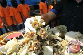 10 karung terumbu karang dari Pulau Sumbawa diamankan Polsek Kayangan