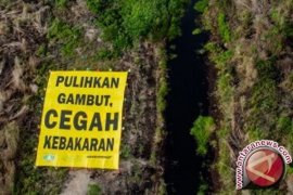 BRG: Peatland restoration cuts greenhouse gas emissions significantly