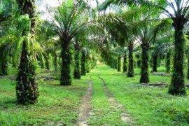Jalan kebun kelapa sawit rawan tempat penyelundupan