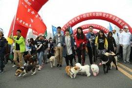 Festival daging anjing di China tetap digelar