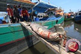KKP minta eksploitasi hiu di Indonesia dihentikan