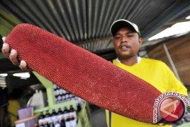 Papua`s Biodiversity Going International