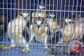 Tim gabungan gagalkan perdagangan ilegal 1.752 burung di Riau