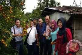 Petani Sambas Belajar Pengelolaan Jeruk Berastagi