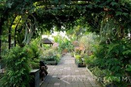 Berkebun di rumah halau kebosanan selama selama isolasi