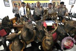 Polda Jambi amankan dua kulit harimau sumatera