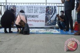 Anak muda Jambi kampanye lestarikan Harimau Sumatera