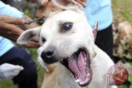 Singkawang Antisipasi Ancaman Rabies