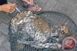 China kekurangan vaksin rabies di tengah lonjakan kasus gigitan anjing dan kucing