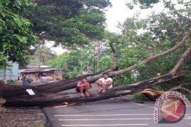 Jalan Kalimulya Depok Rawan Pohon Tumbang