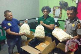 Polisi Dalami Perdagangan Telur Penyu di Berau