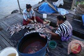 Membuat Ikan Asin Haruan