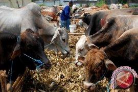 Petugas periksa hewan kurban pascapenyembelihan