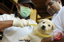 Kalbar Siapkan 58.000 Vaksin Anti Rabies